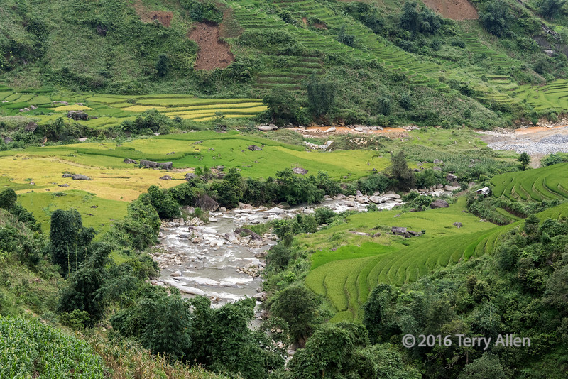 Ripening rice terraces by a small river, near Sa Pa, Vietnam