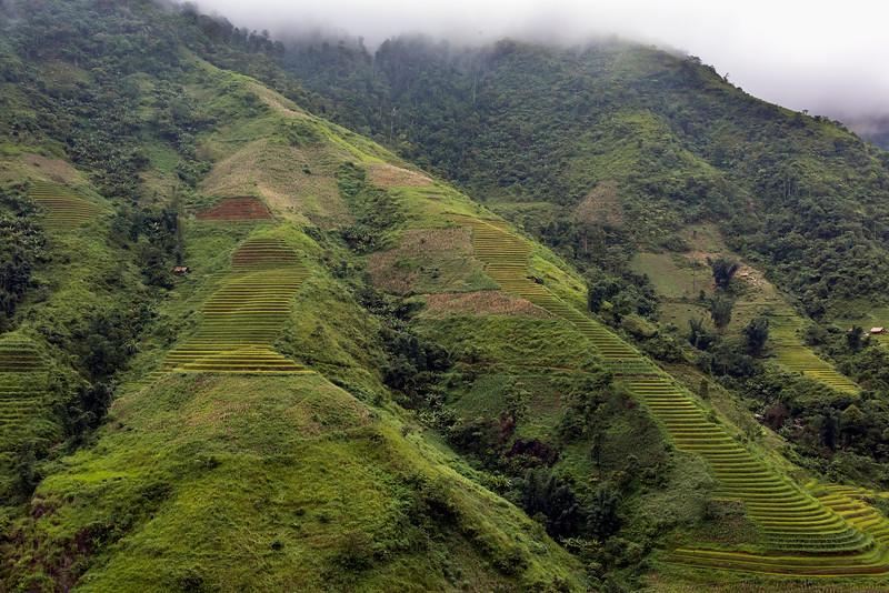 Rice terraces flowing down the ridges, near Sa Pa, Vietnam