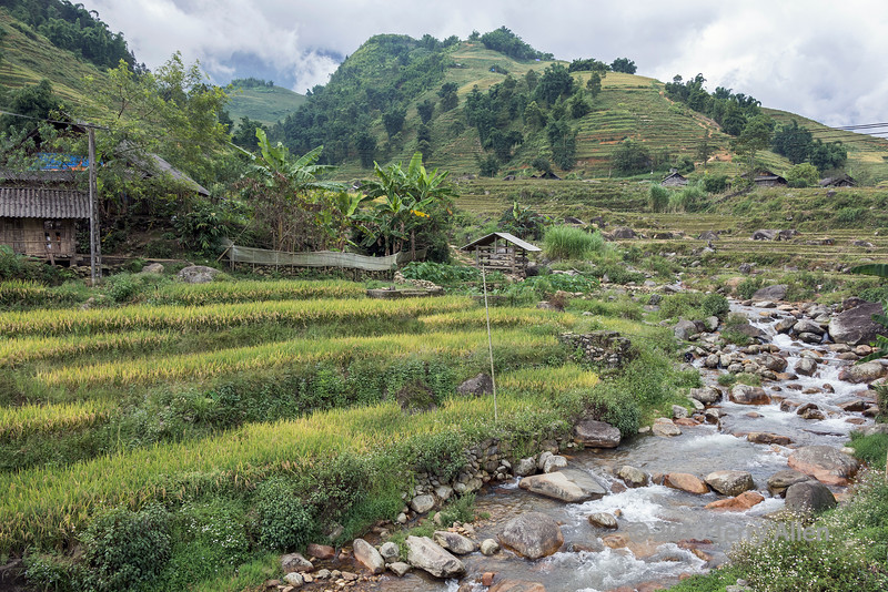 Rice fields and Nuang Hoa River in the Ta Van valley, Sa Pa, north Vietnam