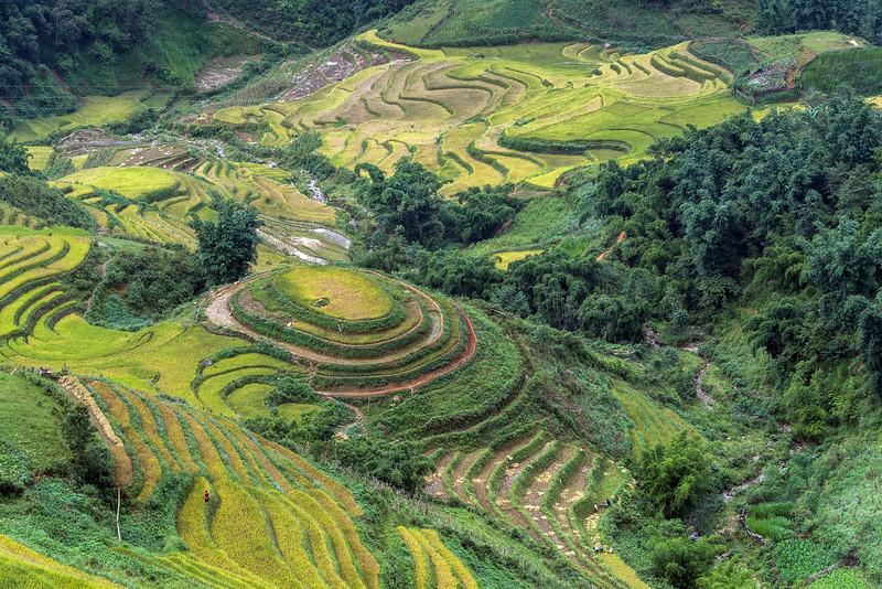 Rice harvest time