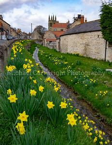 Daffodils at Helmsley