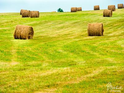 Field near by Blomidon Provincial Park