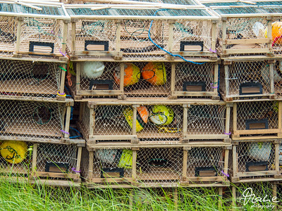 lobster trap in inverness