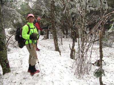 Icy glazed trees at 4,000 feet near the North Kinsman summit.