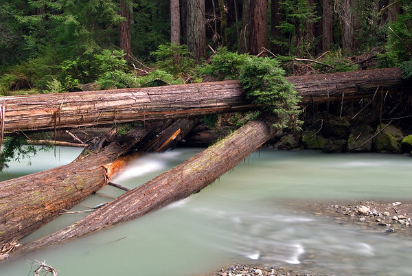 Bull Creek, Humboldt Redwoods State Park