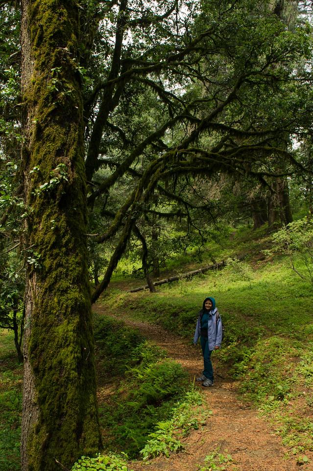 By a green oak tree