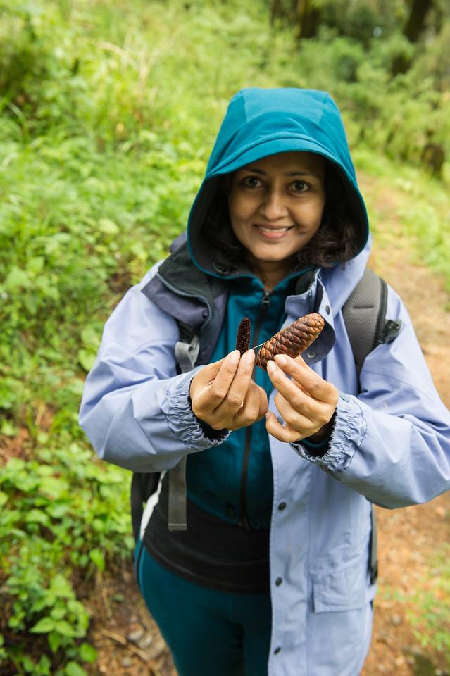 Cedar cones - male (small) and female