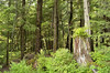 The forest at the Totem Bight State Historical Park