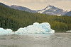 Icebergs calved from LeConte Glacier fill the entrance to LeConte Bay