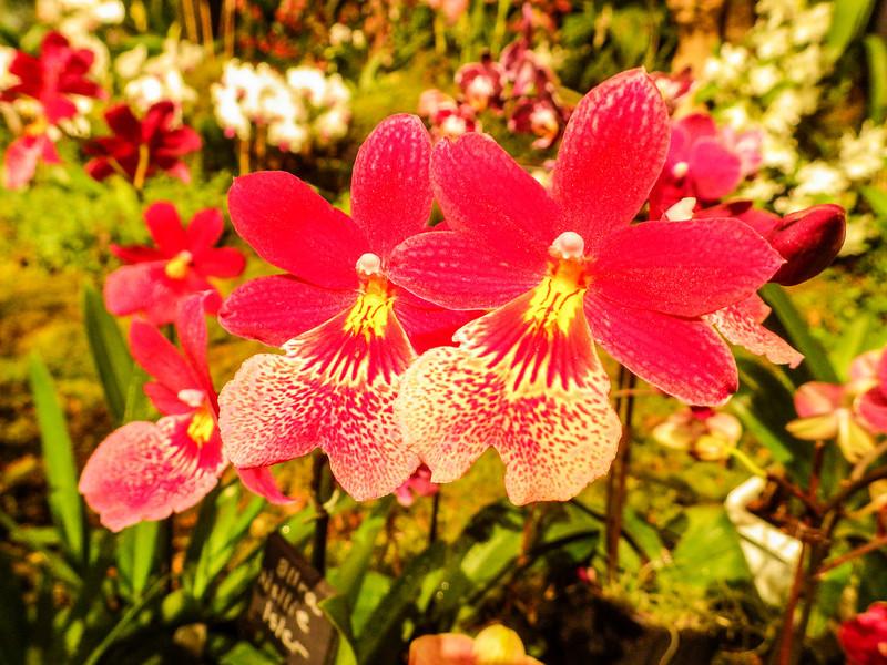 Northwest Flower and Garden Show 2014