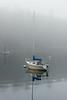 Foggy Morning on Fish Creek