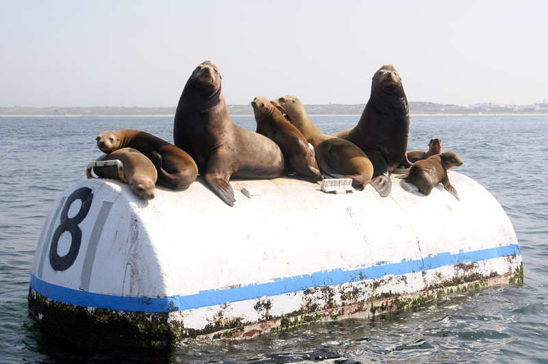 120429_Seals03a