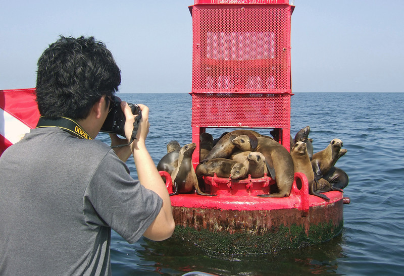 Buoyed up Sea Lions!<br /> Redondo, California.<br /> Photo by Merry Passage.