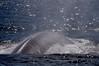 Whale<br /> Offshore, LA County