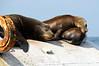 120429_Seals03d