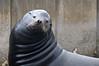 120520_Seal01