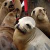 120429_Seals02