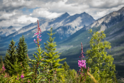 Kootenay Wlidflowers