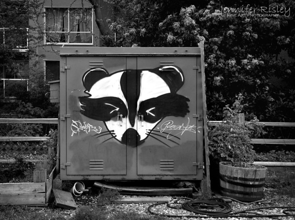 Raccoon Graffiti