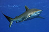 180215_Shark