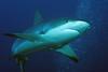 180214_Shark