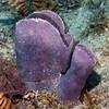 180211_Sponge3b