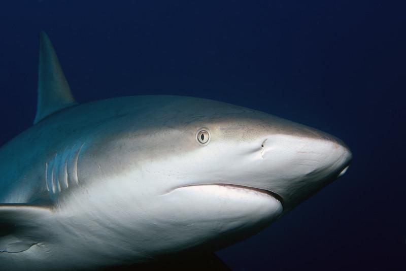 180214_Shark2a
