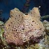 180216_Sponge