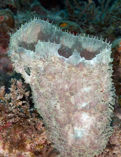 180214_Sponge7