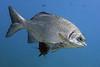 180213_Fish1