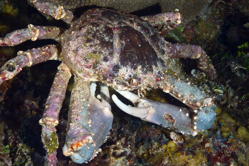 180216_Crab3a
