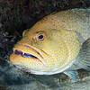 180213_Fish3