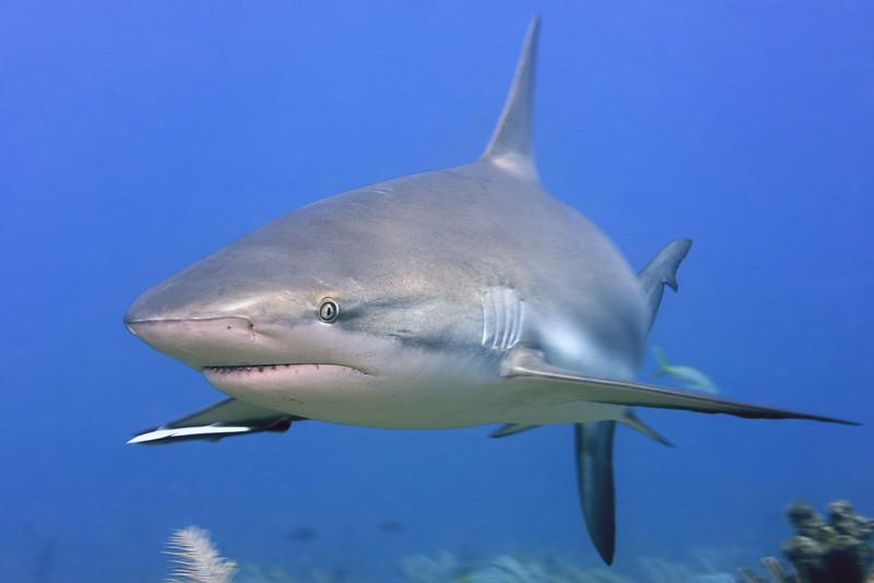 180211_Shark2