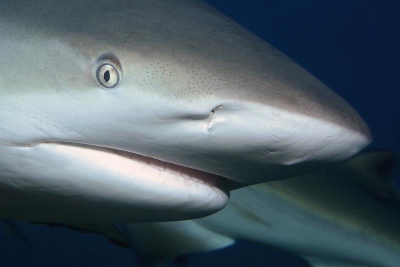 180212_Shark1