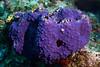 180215_Sponge3