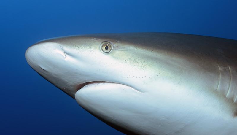 180214_Shark3