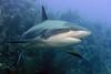180211_Shark1