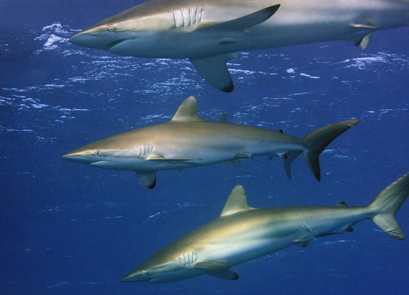 180215_Sharks
