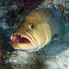 180213_Fish2