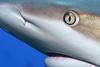 180211_Shark4