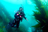 New diver, Rebecca.<br /> Sea Fan Grotto, Catalina Island, California USA