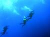 Divers @ Farnsworth Banks<br /> Catalina Island, California