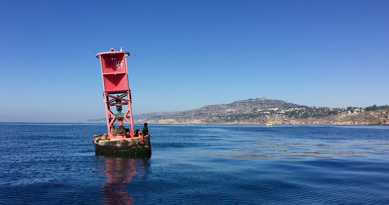Buoy with lounging sea lions.<br /> San Pedro, California