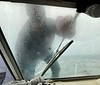 """Mike """"Bart"""" Bartick,  cleaning the Sly Foxx windshield<br /> Catalina Channel, California<br /> January 9, 2021"""