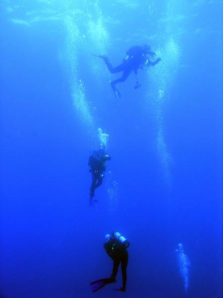 Divers<br /> Farnsworth Bank, Catalina Island