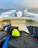 Walter still sleeping, nay, dreaming on the job.<br /> Catalina Channel, California<br /> January 9, 2021