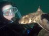 Kathy, with horn shark<br /> Laguna Beach, California