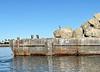 Boulder barge, Mission Bay<br /> December 20, 2020