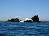 Dive Site: Seal Rock<br /> Crescent Bay, Laguna Beach, California USA