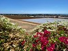 Flower Fields, Carlsbad, CA<br /> Enroute to La Jolla Shores<br /> August 30, 2020